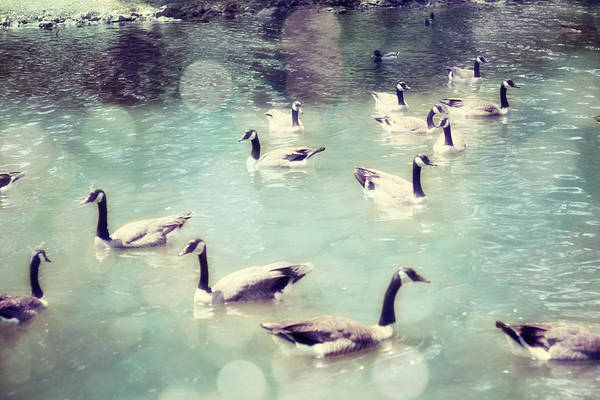 Canadian Geese Art Print featuring the photograph Life Is But A Dream by Amy Tyler