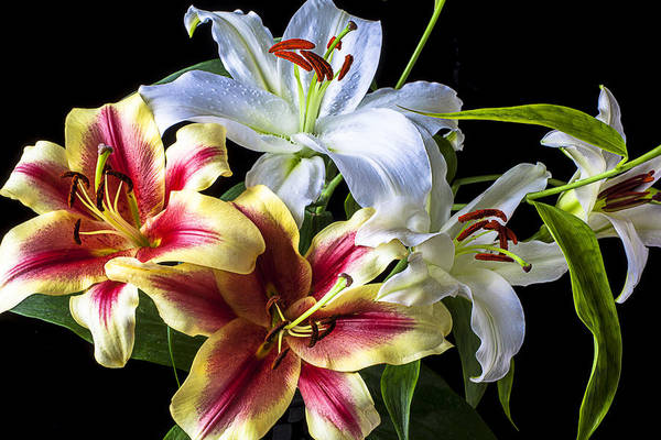 Bouquet Art Print featuring the photograph Lily Bouquet by Garry Gay