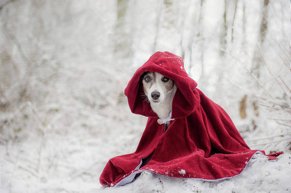 Winter Art Print featuring the photograph Little Red Riding Hood In Winter by Heike Willers