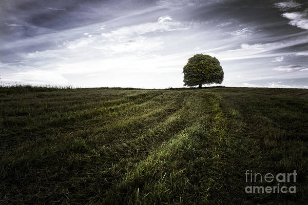 Big Sky Art Print featuring the photograph Lone Tree by John Farnan