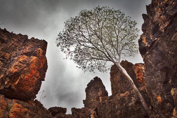 Australia Print featuring the photograph Lonely Gum Tree by Dirk Ercken