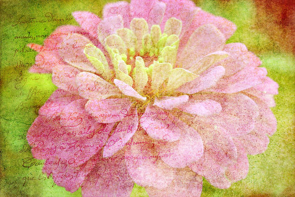 Nature Art Print featuring the photograph Love Letters by Kay Novy