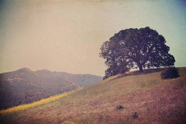 Mt. Diablo State Park Art Print featuring the photograph Love Lifts Us Up by Laurie Search