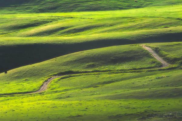 Green Art Print featuring the photograph Luminous Green by Joan Herwig