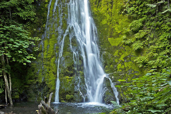 Water Art Print featuring the photograph Madison Creek Falls #1 by Roy Cage