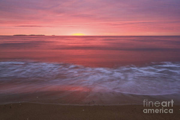 Pink Art Print featuring the photograph Magenta Morning by Brenda Giasson