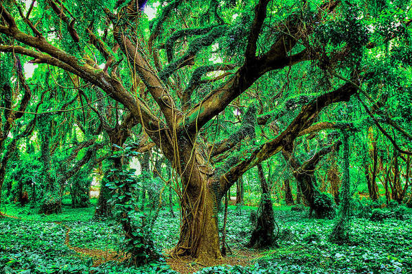 Funny Art Print featuring the photograph Maui Tree by Robert Aycock