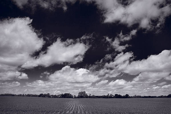 Cloud Art Print featuring the photograph Midwest Corn Field Bw by Steve Gadomski