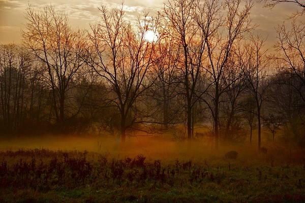Sunrise Art Print featuring the photograph Morning Mist by Kimberly Davidson