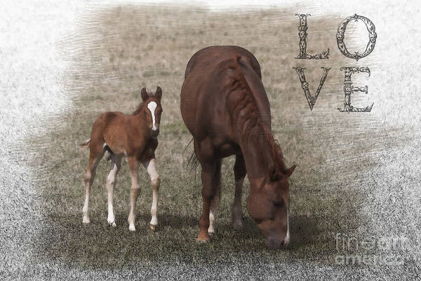 Horse Art Print featuring the photograph Mother And Son Love by Janice Pariza