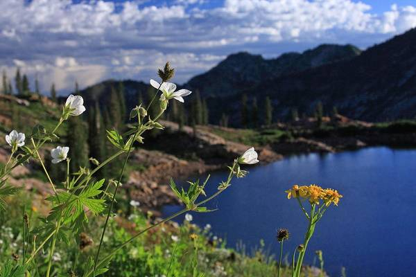 Bloom Art Print featuring the photograph Mountain Wildflowers by Gene Praag