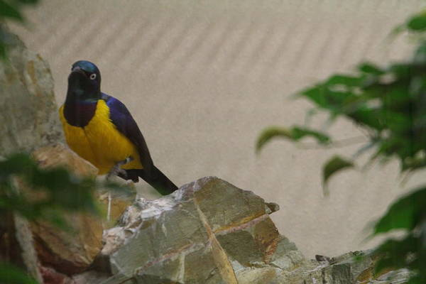 National Art Print featuring the photograph National Zoo - Birds - 01137 by DC Photographer