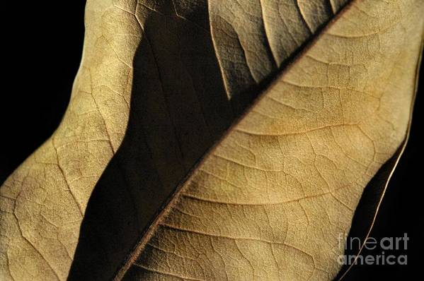 Nature Print featuring the photograph Natural Seduction by Dan Holm