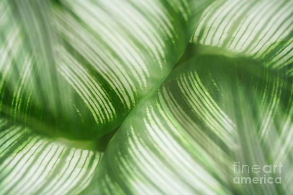 Leaf Print featuring the photograph Nature Leaves Abstract In Green 2 by Natalie Kinnear