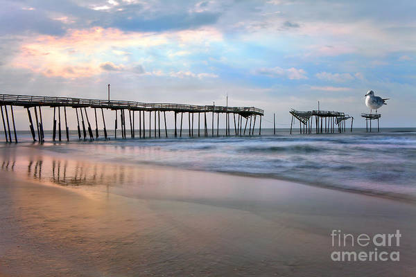 Outer Banks Art Print featuring the photograph Nesting On Broken Dreams - Outer Banks by Dan Carmichael