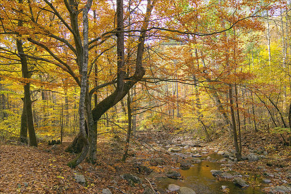 Landscape Art Print featuring the photograph North Creek Autumn - Mid Afternoon - 04043 by Byron Spencer