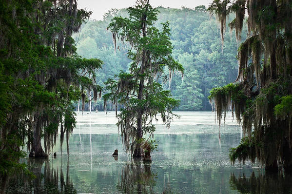 Swamp Print featuring the photograph North Florida Cypress Swamp by Rich Leighton