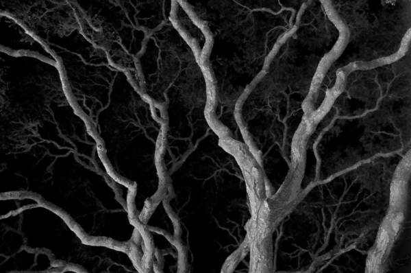 Old Oak Art Print featuring the photograph Oak Tree Canopy Under A Night Sky by Scott Lenhart