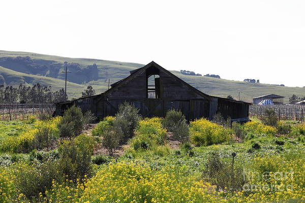 Sonoma Art Print featuring the photograph Old Barn In Sonoma California 5d22235 by Wingsdomain Art and Photography