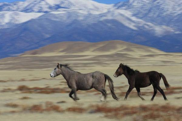 Wild Art Print featuring the photograph On The Move by Gene Praag