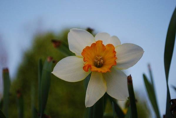 Nature Art Print featuring the photograph Orange And White by April Rouse
