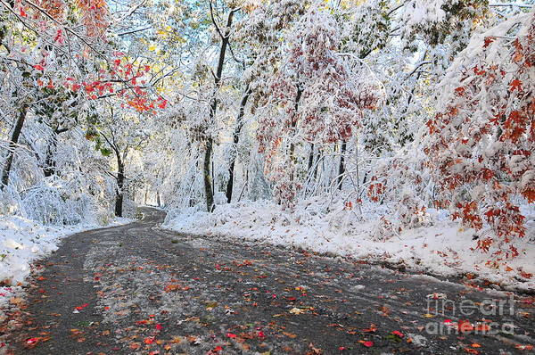 Snow Art Print featuring the photograph Painted Snow by Catherine Reusch Daley