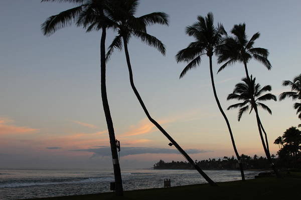 Pacific Ocean Art Print featuring the photograph Palm Trees by Dick Willis