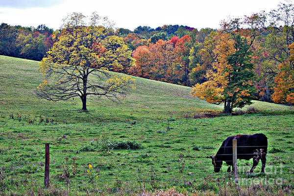 Pasture Art Print featuring the photograph Pasture by Tim Hauser