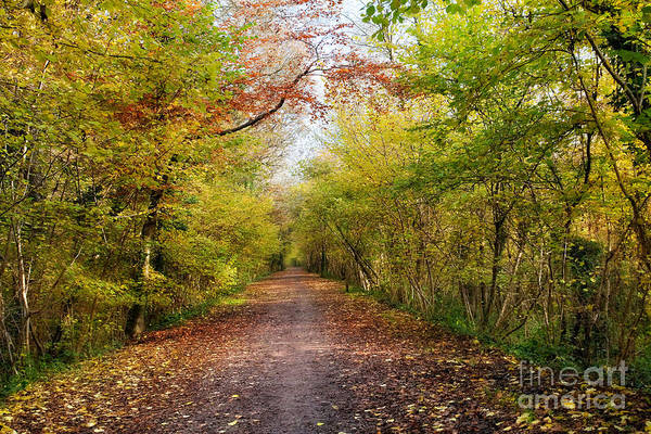 Leaf Art Print featuring the photograph Pathway Through Sunlit Autumn Woodland Trees by Natalie Kinnear