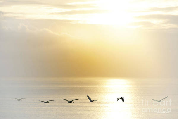 Pelican Art Print featuring the photograph Pelicans Over Malibu Beach California by Artist and Photographer Laura Wrede
