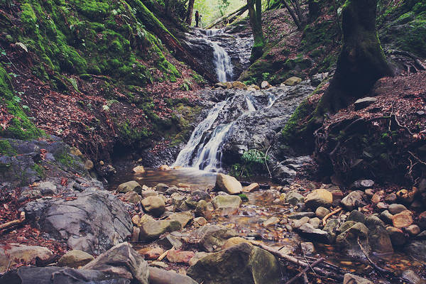 Uvas Canyon County Park Art Print featuring the photograph Picturesque by Laurie Search