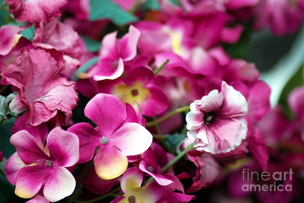 Flowers Art Print featuring the photograph Pink Canvas Flora by Optical Playground By MP Ray