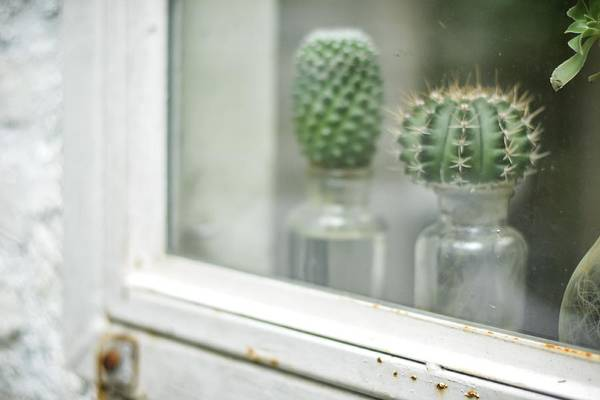 Plant In Glass Bottle Cactus In The Garden Terrarium Mini