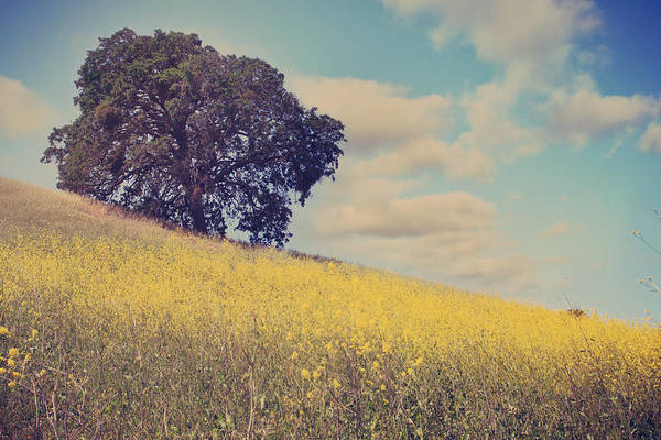 Mt. Diablo State Park Art Print featuring the photograph Please Send Some Hope by Laurie Search