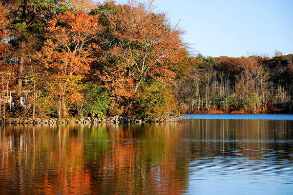 Pond Art Print featuring the photograph Pond Reflections by Francie Davis