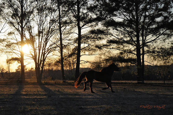 Nature Art Print featuring the photograph Pony's Evening Pasture Trot by Paulette B Wright