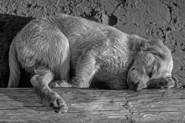 Puppy Art Print featuring the photograph Pooped Puppy Bw by Steve Harrington