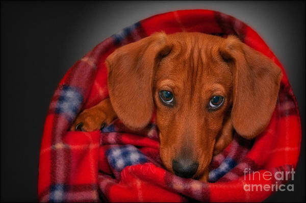 Puppy Print featuring the photograph Puppy Love by Susan Candelario
