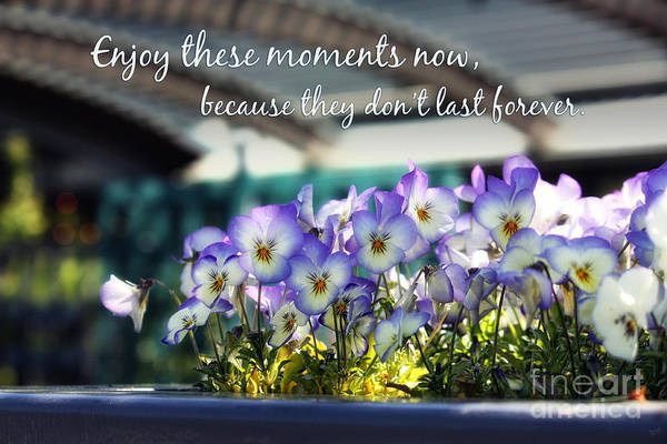 Quotes Art Print featuring the photograph Purple Pansies And Life Quote by Nishanth Gopinathan