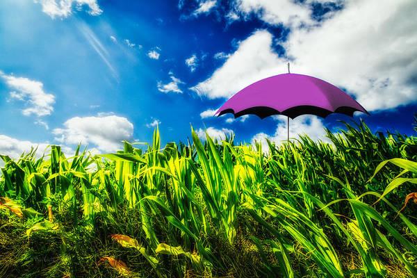Umbrella Art Print featuring the photograph Purple Umbrella In A Field Of Corn by Bob Orsillo