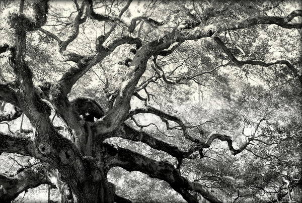 Abstract Trees Art Print featuring the photograph Reaching For Heaven by Karen Wiles