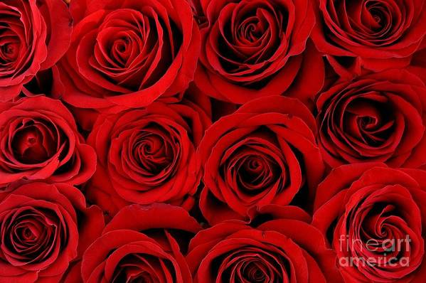 Nature Art Print featuring the photograph Red Passion by Gene Mark