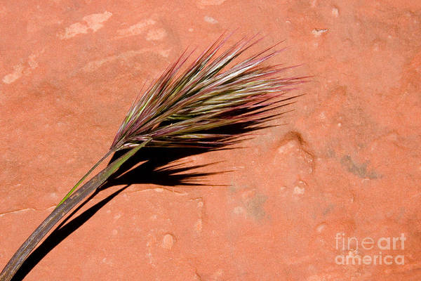 Nature Art Print featuring the photograph Red Rock In Arizona by Julia Hiebaum