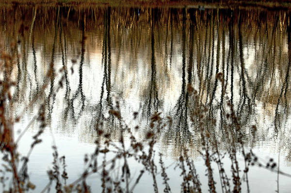 Water Art Print featuring the photograph Reflections by Joanne Beebe