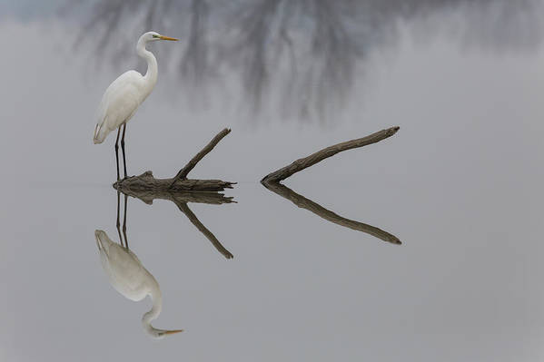 Heron Art Print featuring the photograph Reflections by Mauro Montuori