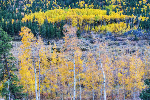 Autumn Print featuring the photograph Rocky Mountain Autumn Contrast by James BO Insogna