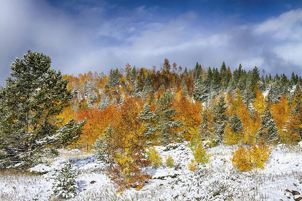 Snow Print featuring the photograph Rocky Mountain Autumn Storm by James BO Insogna