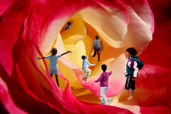 Rose Art Print featuring the digital art Rose Labyrinth by Lisa Yount