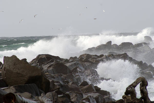 Rough Art Print featuring the photograph Rough Sea At Ocean Shores by Alan Hepworth Photography
