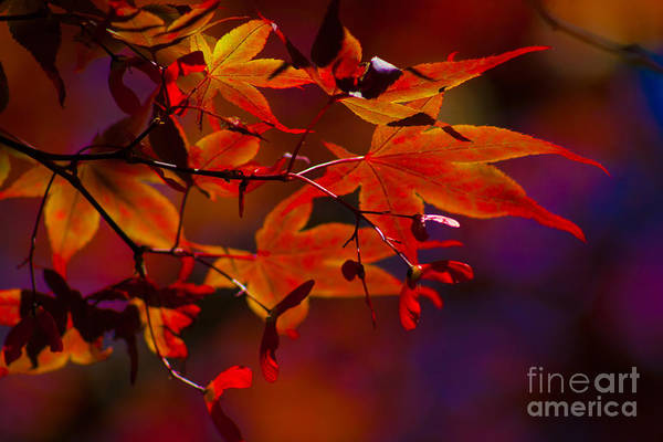 Leaves Art Print featuring the photograph Royal Autumn A by Jennifer Apffel